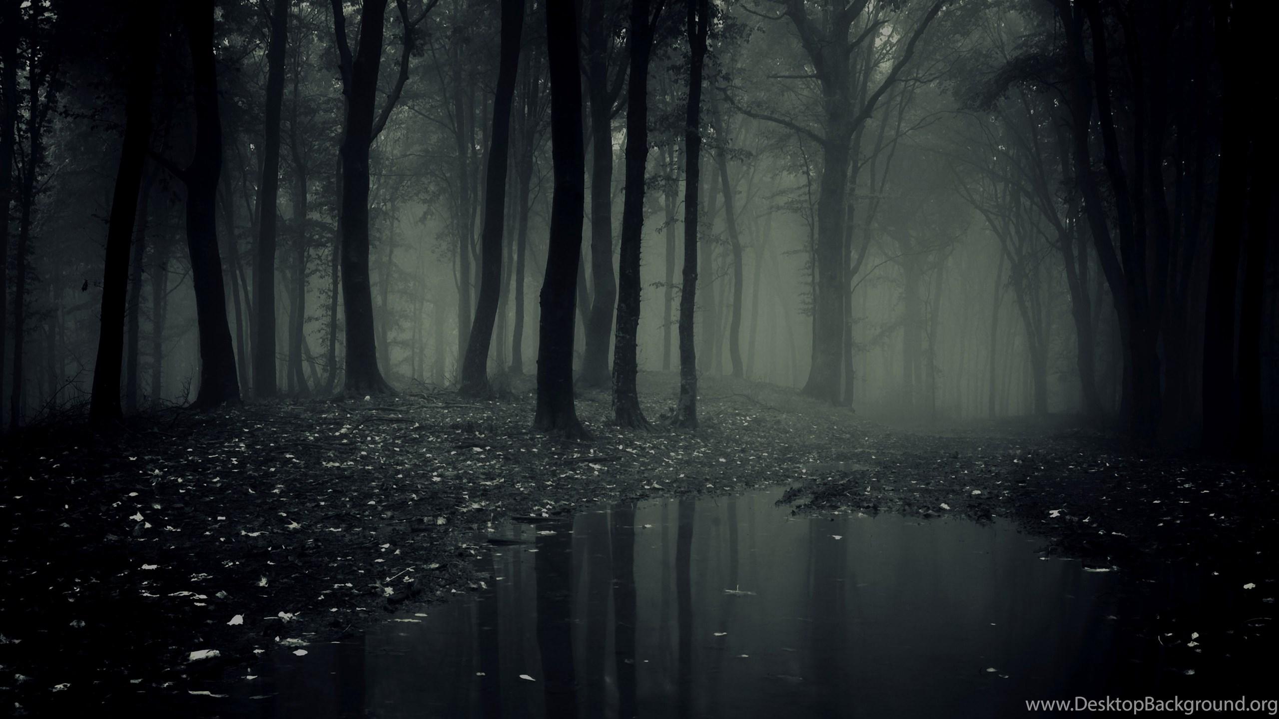 Dark Forest Wallpapers Desktop Background