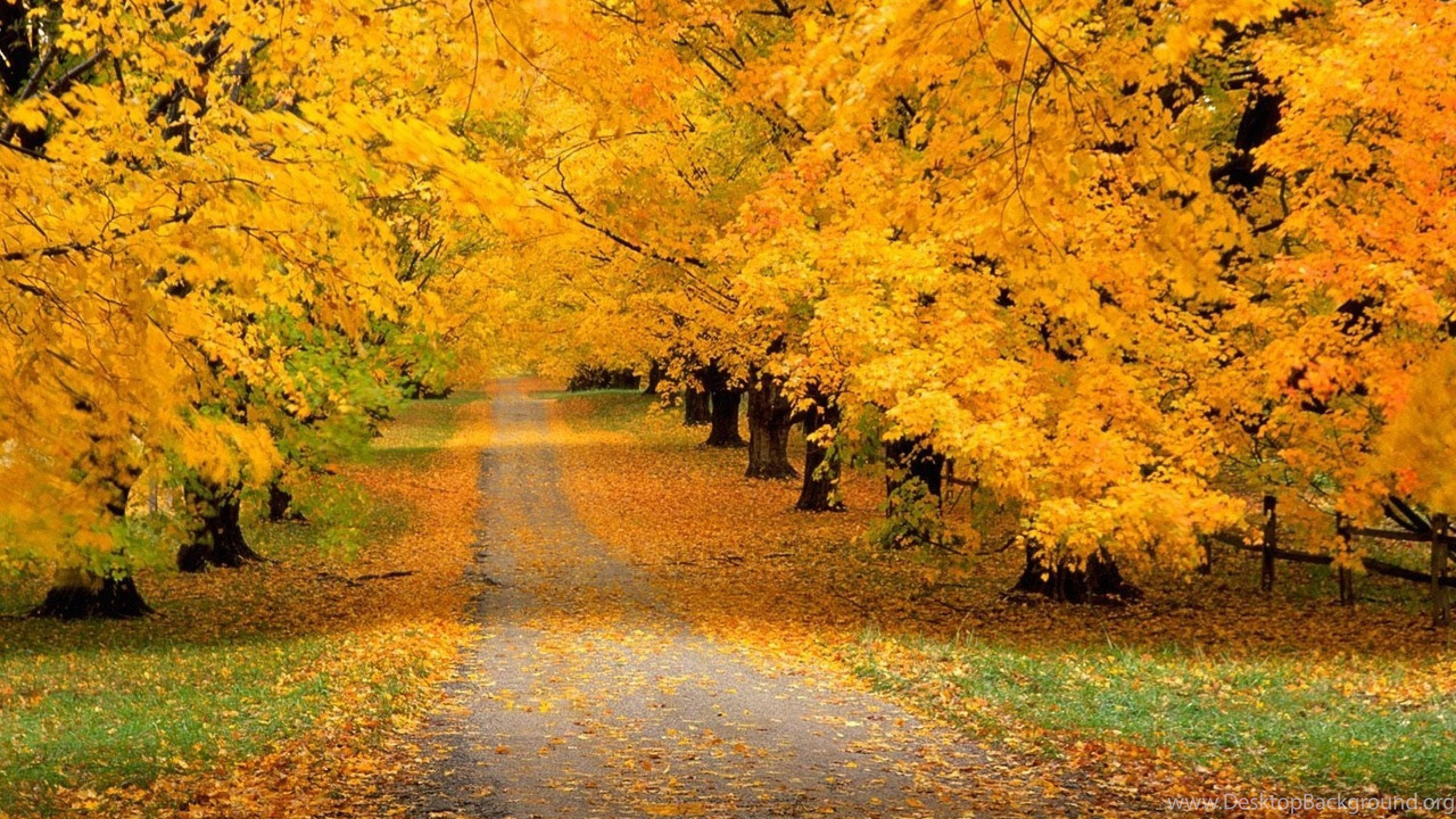 autumn leaves wallpaper android download wallpapers 2560x1600 trees park autumn leaves yellow