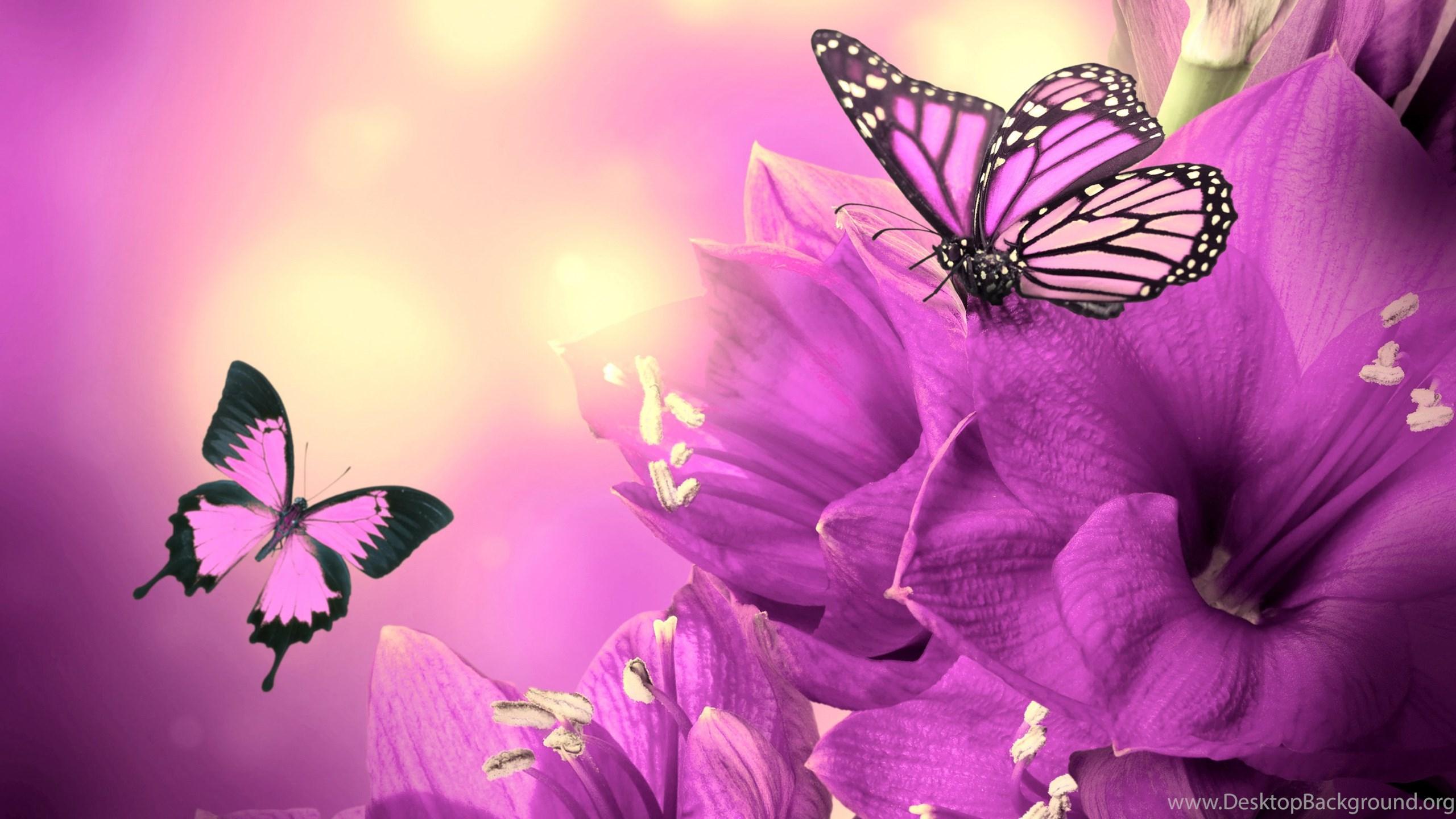 Purple butterfly wallpaper - photo#44
