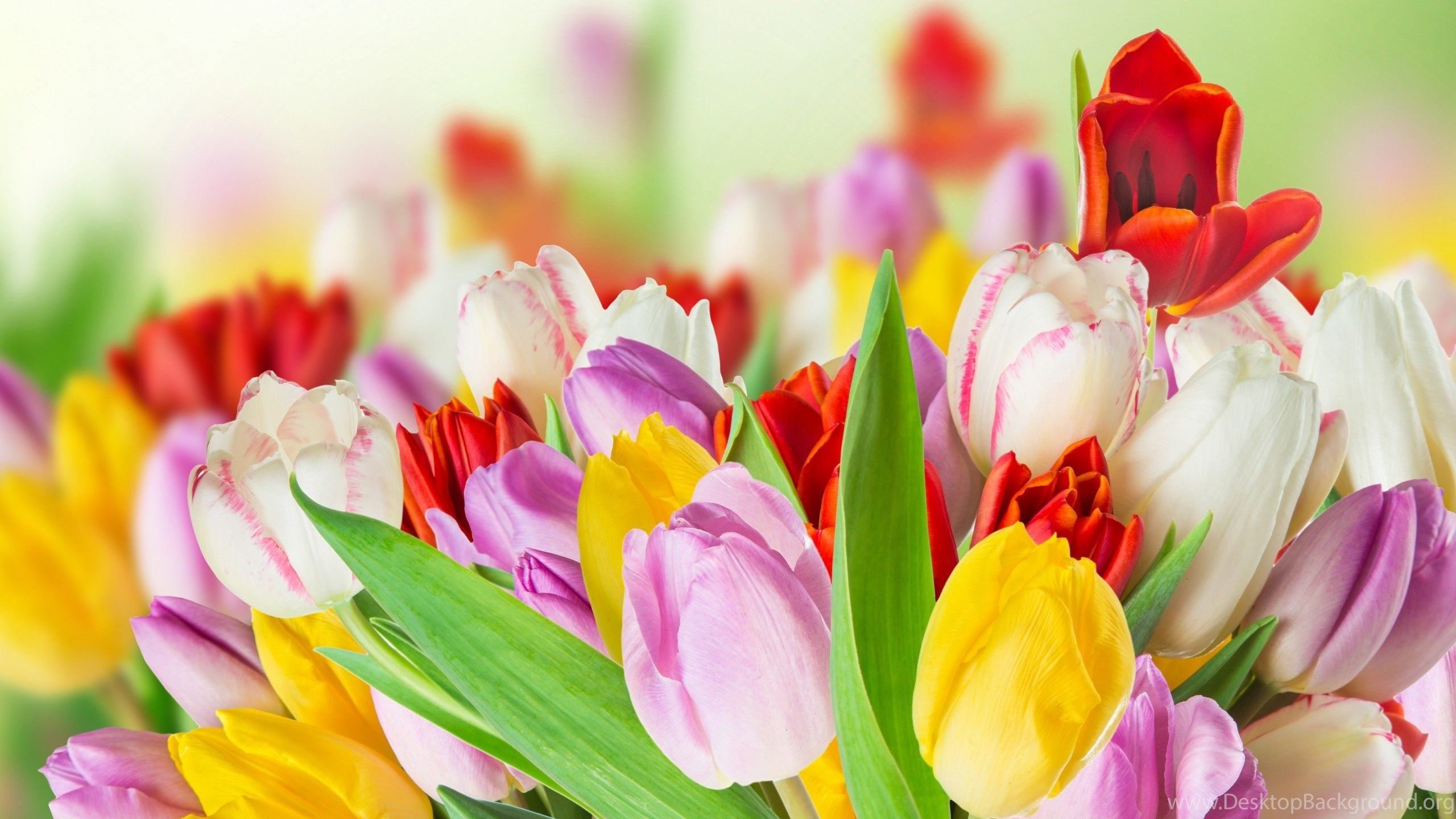 spring beauty colorful flowers wallpapers hd download desktop background