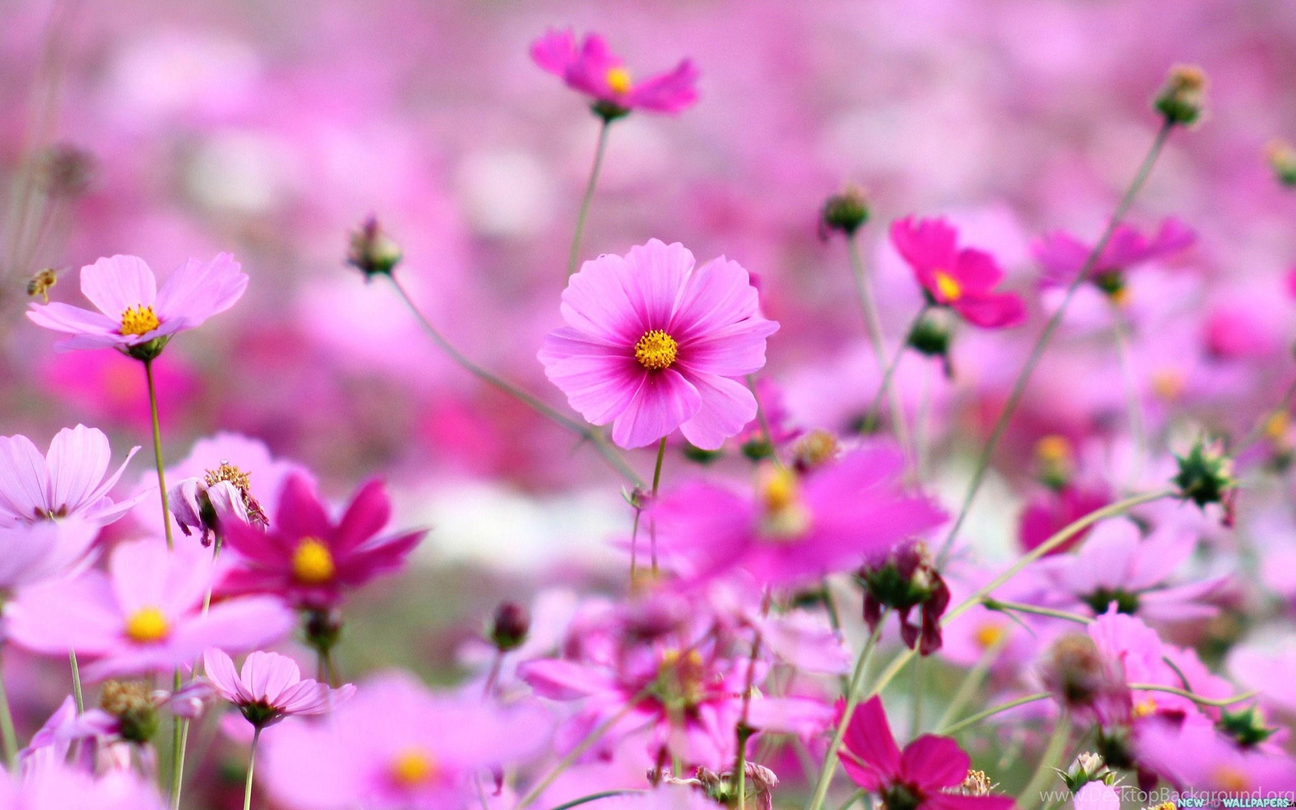 Beautiful Purple Flowers Hd Desktop Wallpapers New Hd Wallpapers
