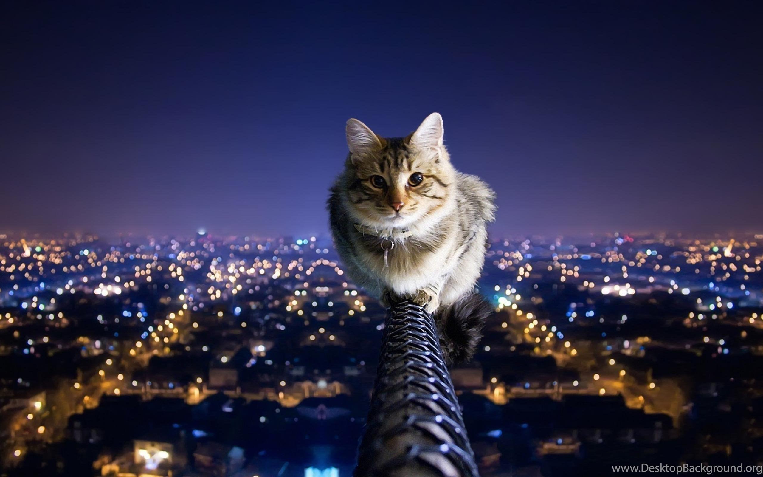К чему снится кошка во сне женщине: 20 популярных толкований.