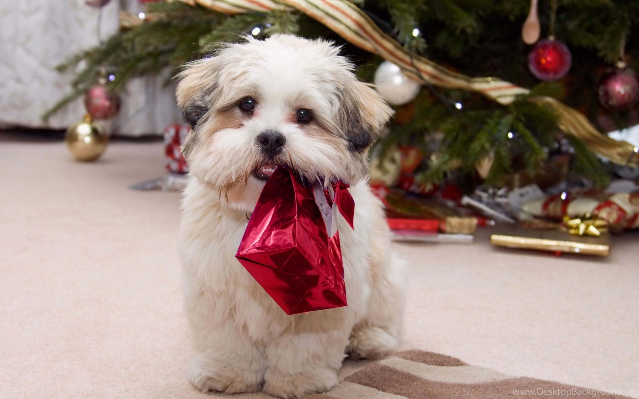 Cute Christmas Dog Wallpapers And Pictures. Chipsu Dogs Pictures ...
