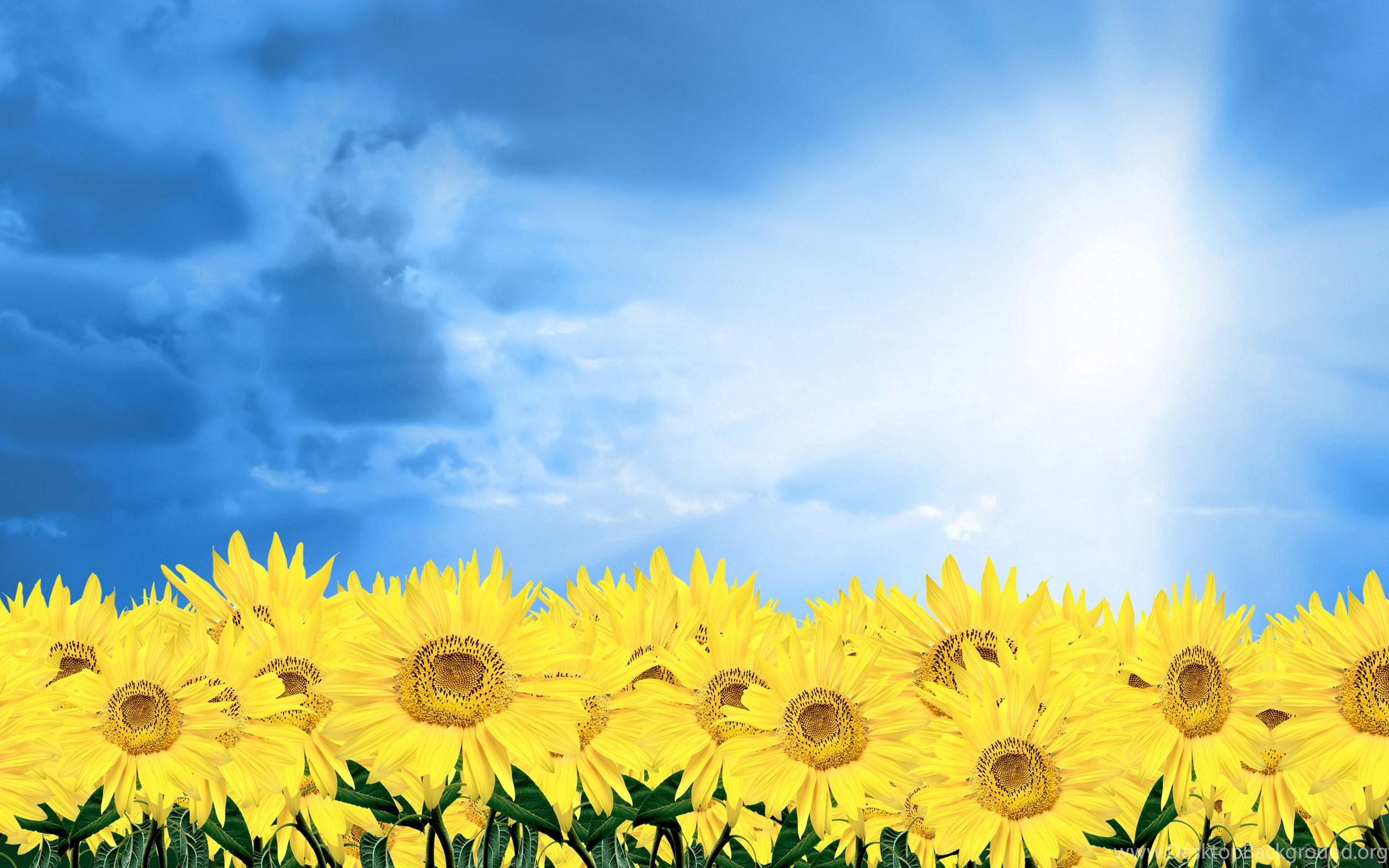 Free Desktop Wallpapers Spring Flowers Wallpapers Cave Desktop