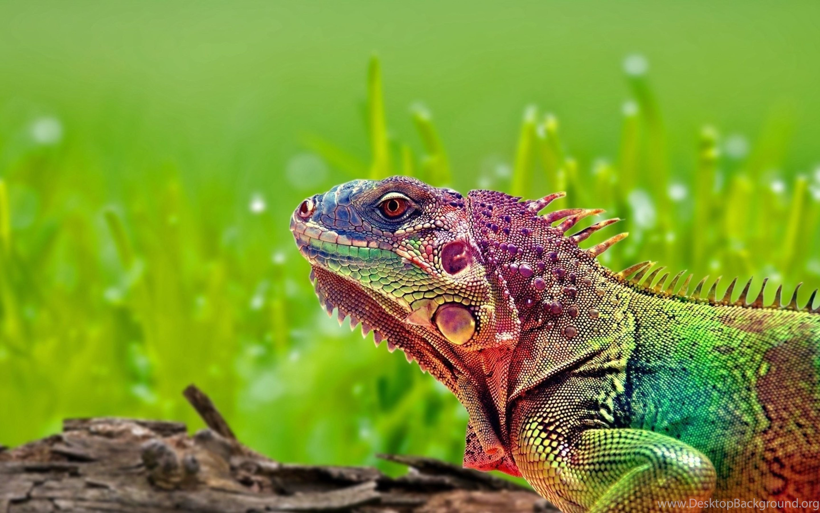 Download Wallpapers 3840x2160 Iguana, Reptile, Color, Spots