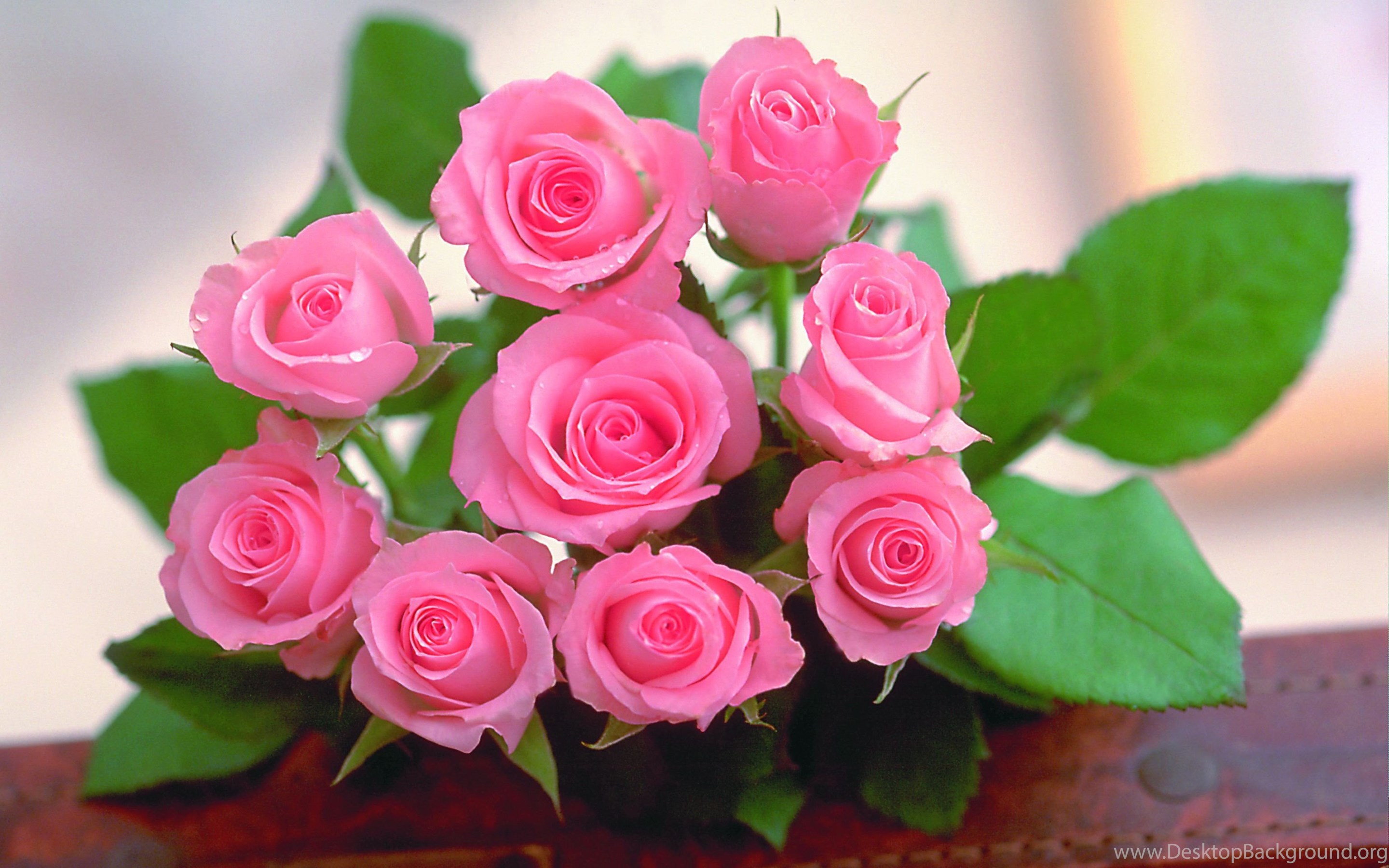 Worlds top 100 beautiful flowers images wallpapers photos free mobile izmirmasajfo