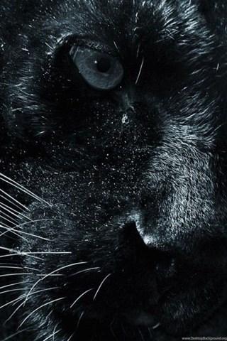 Black Jaguar Animal Wallpaper Hd 1024x640jpg Desktop Background