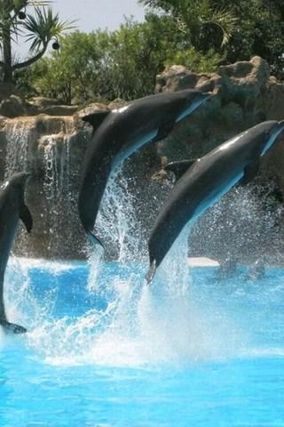 Dolphins Sunset Jump Animals HD Desktop Wallpapers