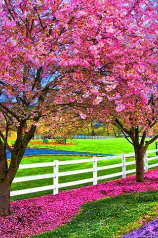 A Beautiful Spring Day Computer Wallpapers Desktop