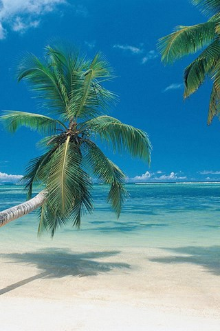 Beach palm trees wallpapers free beach palm trees wallpapers desktop background - Palm tree wallpaper for android ...