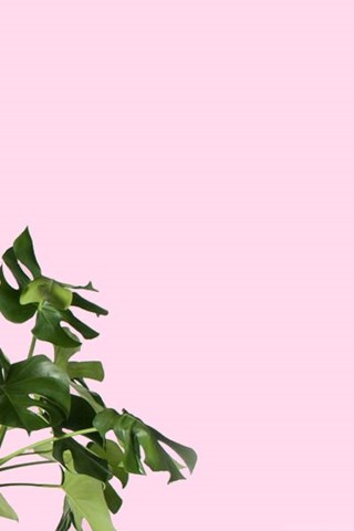 Monstera Plant Desktop Amp Iphone Wallpapers From Gold