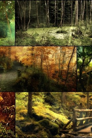 Download The Mysterious Forest Screensaver Animated Wallpapers Desktop Background