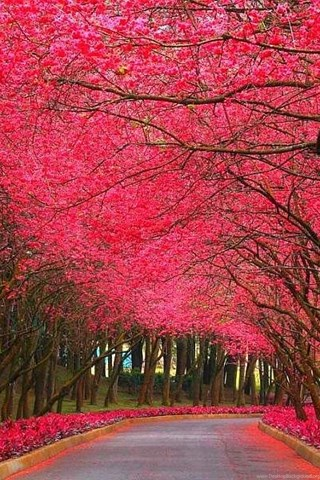 pinky nature beautiful cool hd wallpaper nature wallpaper