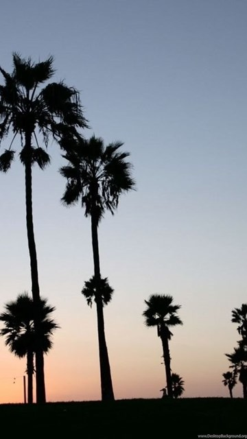 Palm trees silhouette hd desktop wallpapers widescreen high desktop background - Palm tree wallpaper for android ...