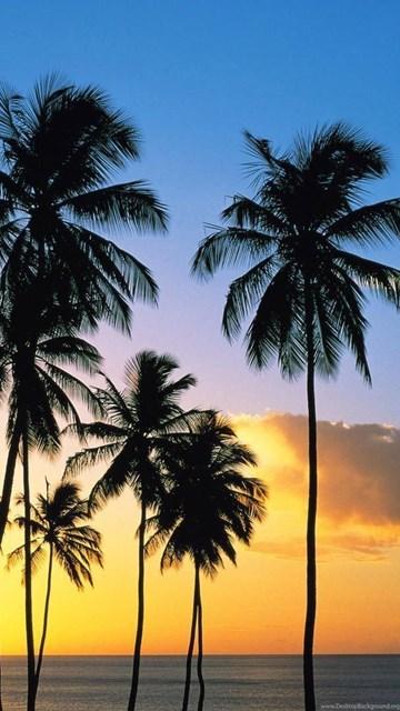 California Palm Trees Wallpaper Desktop Background