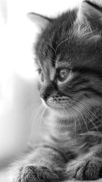 Cute Cat Wallpapers For Desktop Av6 Pretty Wallpapers Hd Desktop Background