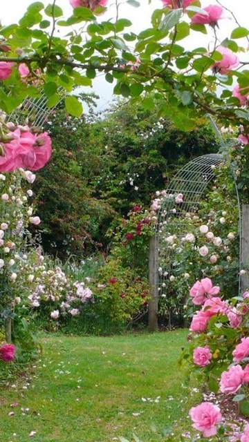 Rose Garden Wallpapers Hd Wallpaper Backgrounds Of Your Choice Desktop Background
