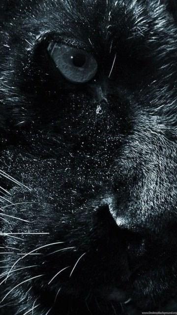 Black jaguar animal wallpaper hd 1024x640g desktop background desktop background exif data voltagebd Images