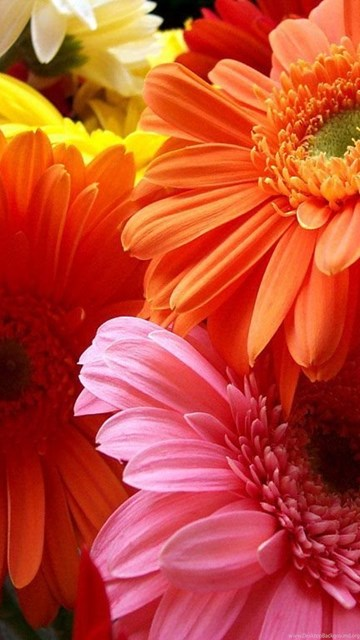 Beautiful Flowers Wallpapers For Pc Pc Wallpapers Desktop Background