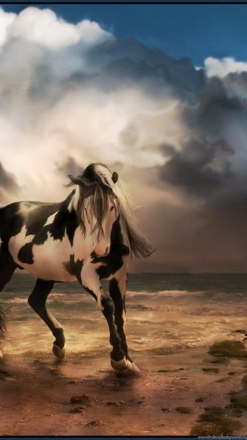 Horse Wallpapers Free Download All Wallpapers New Desktop Background
