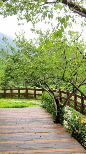 Gardens Wallpaper: Green Garden Wallpaper Backgrounds Hd 1024x768 ...
