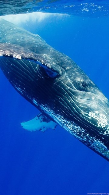 Blue Whale Wallpapers Wallpapers Cave Desktop Background