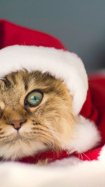 Merry Christmas Animals.Christmas Animals Wallpapers Desktop Merry Christmas And New Year