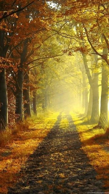 fall nature backgrounds. Desktop Background EXIF Data Fall Nature Backgrounds