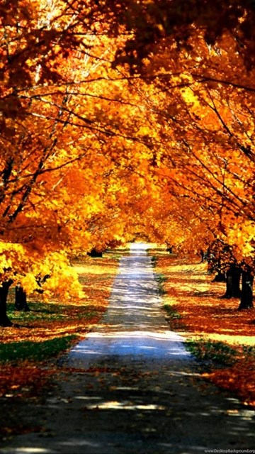 Fall Nature Wallpapers High Resolution Fall Nature