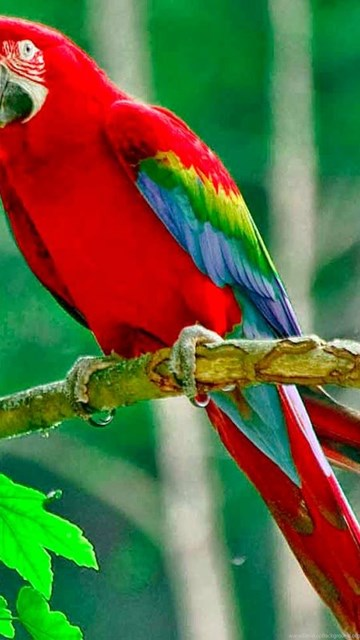 40 Free Beautiful Birds Wallpapers Hd Desktop Background