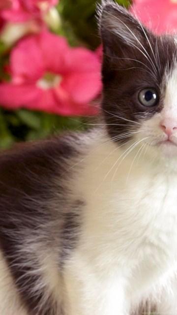 Cute Cats Wallpapers Desktop Background