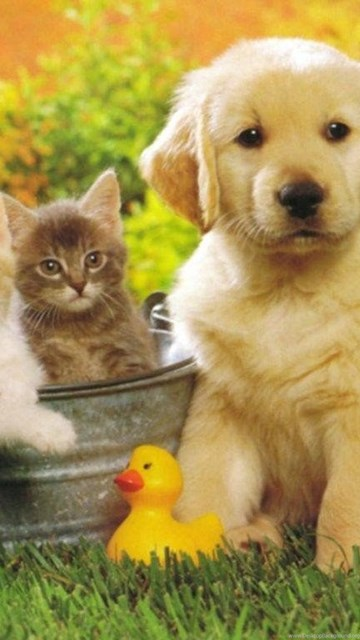 Cat And Dog Wallpapers Hd Image Dog And Cat Hd Wallpapers Of Cats Desktop Background