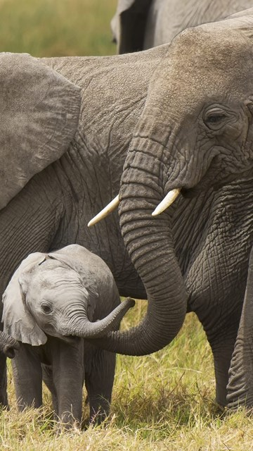 Elephants With Cute Little Baby Elephant HD Wallpapers ...
