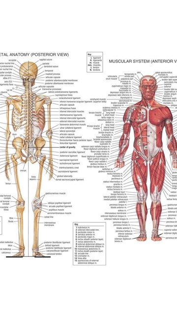 Human Anatomy Hd Wallpapers Fullhdwpp Full Hd Wallpapers 1920x1080
