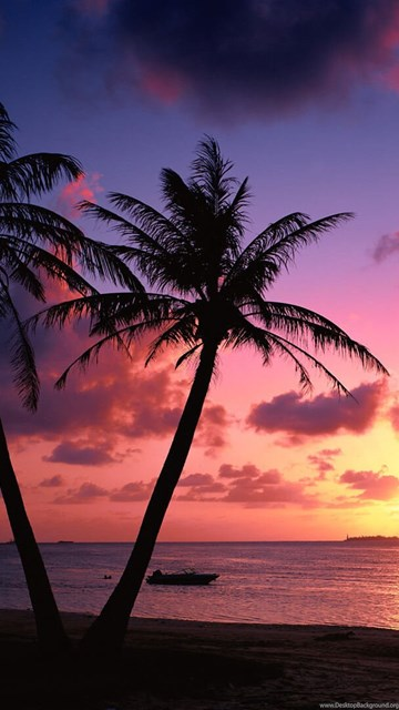 Tropical beach palm trees sunset wallpapers desktop background - Palm tree wallpaper for android ...
