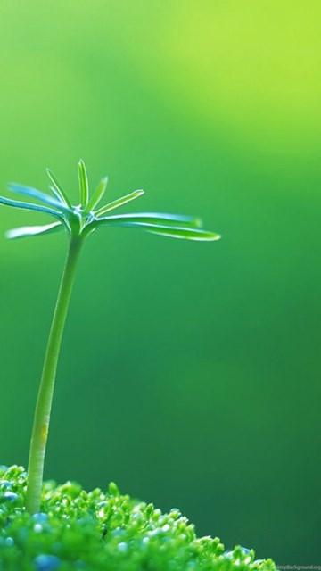 green eye protection 1 desktop wallpapers free downloads