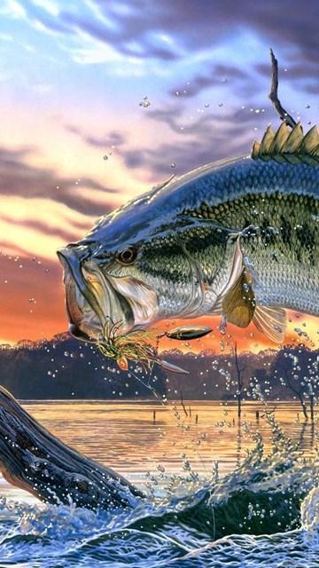 Bass Fishing Wallpaper Backgrounds Wallpapers Cave Desktop Background