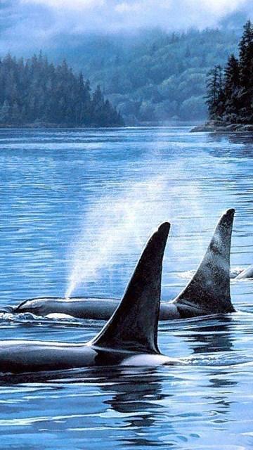 Great orca wallpapers desktop background desktop background exif data thecheapjerseys Images