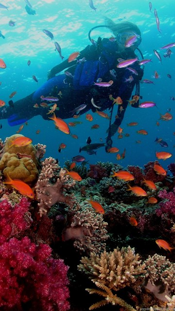 Scuba diving at great barrier reef wallpapers desktop - Great barrier reef desktop background ...