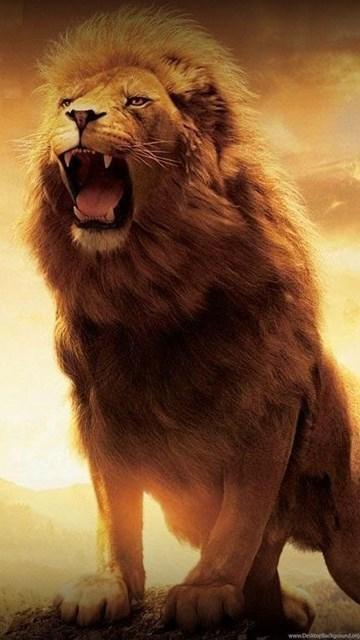 Roaring Lion Pictures Wallpapers 3d Hd Pictures Desktop Background