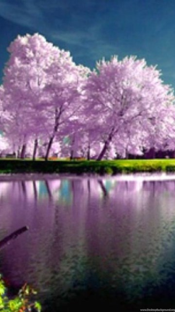 Hd spring nature wallpapers free desktop background - Background pictures of nature for desktop ...