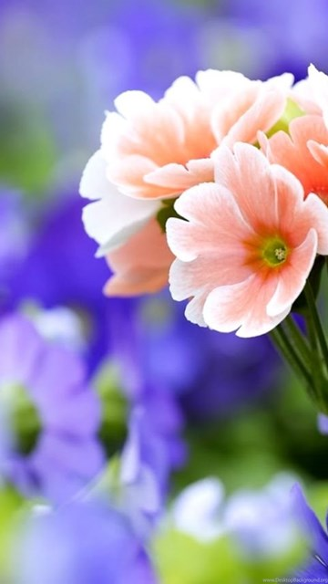 Very pretty flowers pictures desktop background desktop background exif data mightylinksfo
