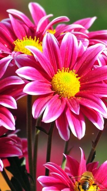 Beautiful Flower Hd Wallpapers Free Download Desktop Wallpapers