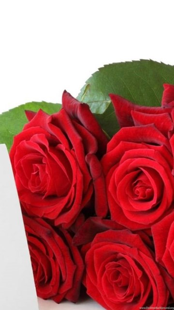 Red roses for free download beautiful rose flower wallpapers free desktop background exif data voltagebd Gallery