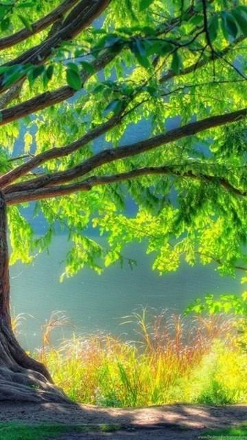 Nature Wallpapers Hd 1080p Widescreen Desktop Background