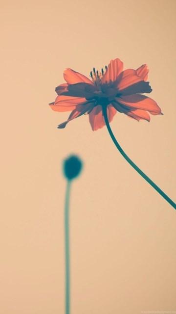 Flowers Tumblr HD Desktop Wallpapers : Widescreen : High Definition