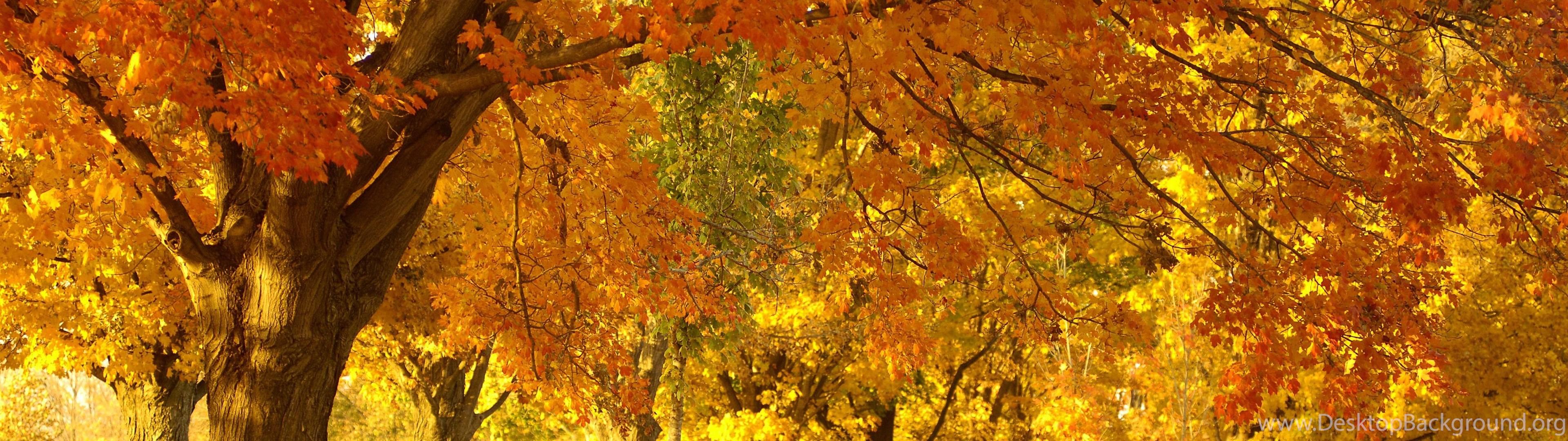 dried autumn leaf hd wallpapers desktop background