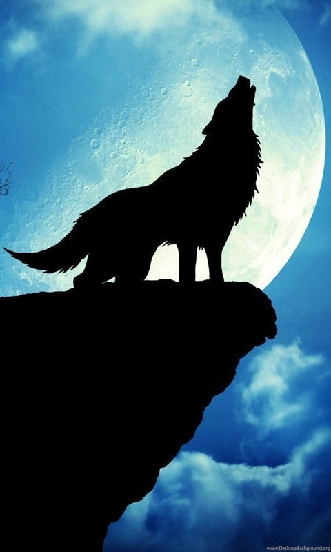 1500 X 1000 Pictures: Cool Wolf Backgrounds Desktop Background
