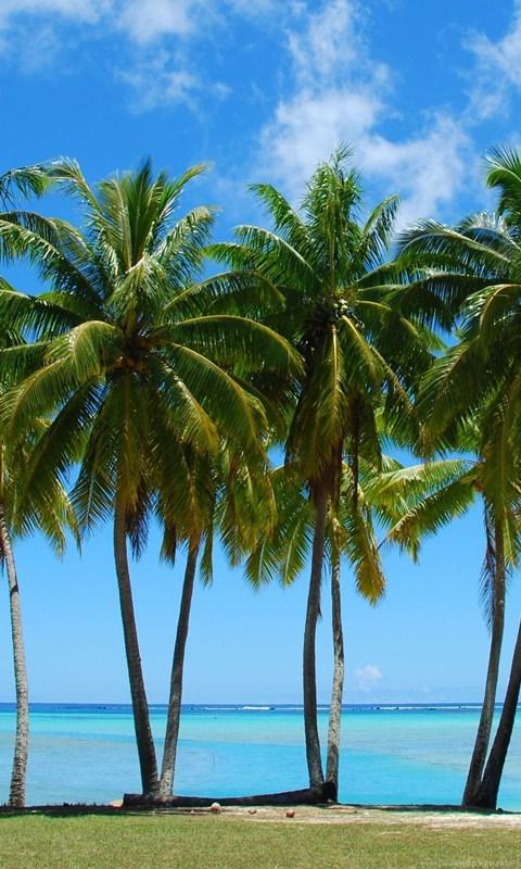 tumblr palm tree sticker