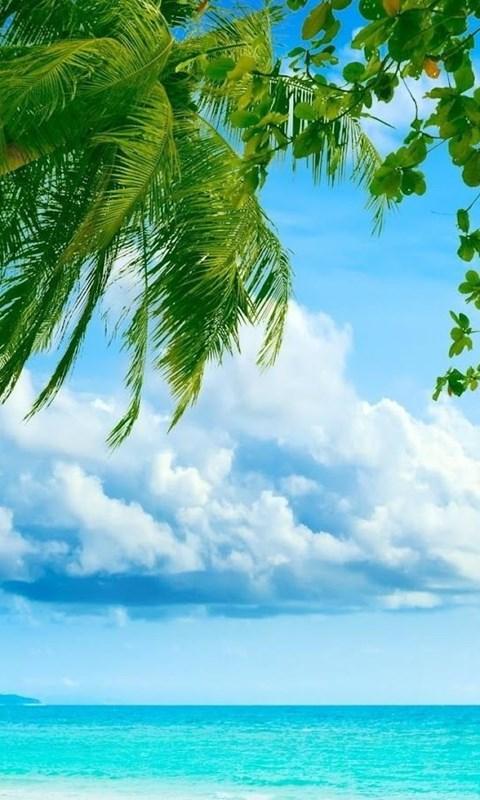 3d Nature Wallpaper Hd 1080p Jpg Desktop Background